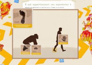 Jeu des différences entre les empreintes d'un gorilles et celles d'un Homme