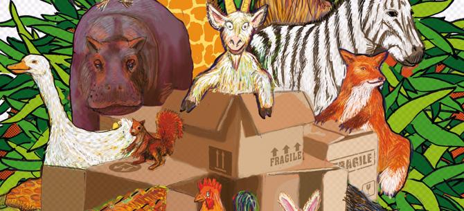 Les animaux en boîte – Visuel