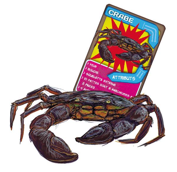 Malle pédagogique les animaux en boite. Le crabe.