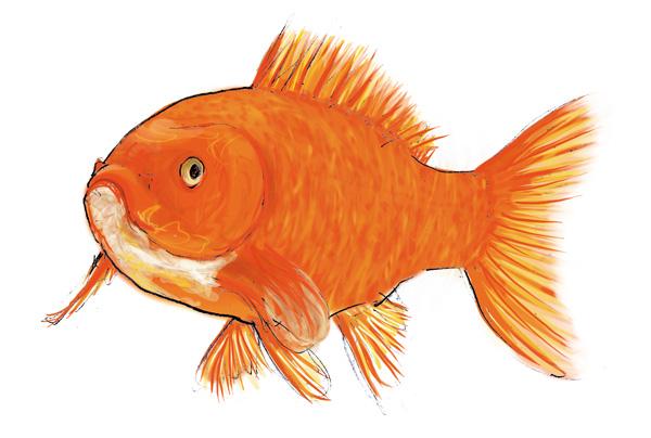 Malle pédagogique les animaux en boite. Le poisson.