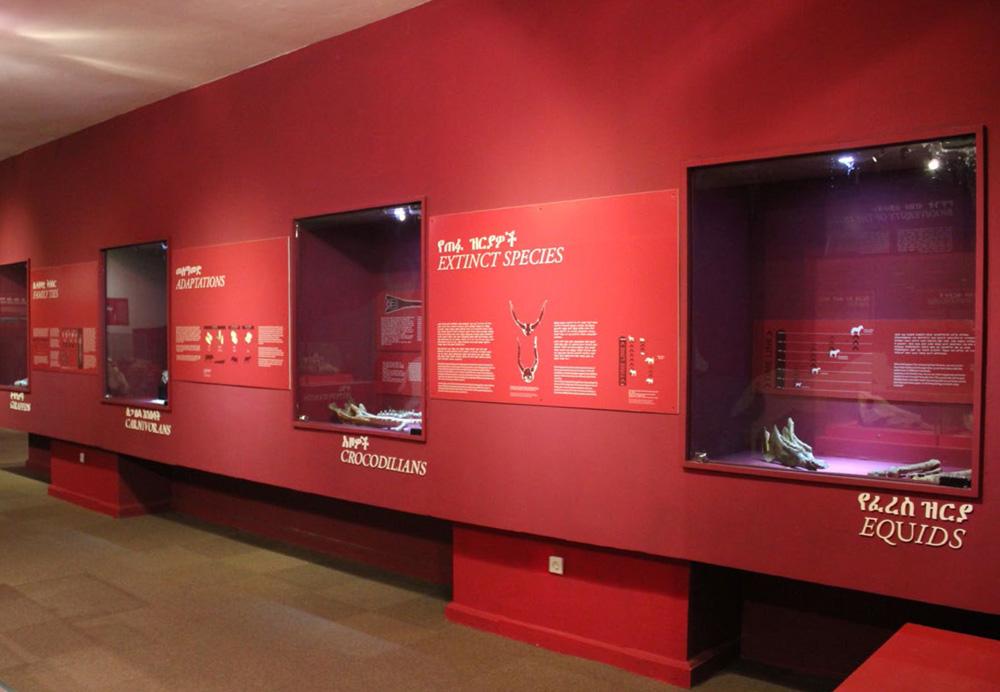 Vitrines latérales, National Museum of Ethiopia