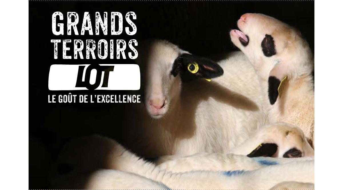 Comité de Promotion des Produits du Lot - filières de l'agneaux du Quercy