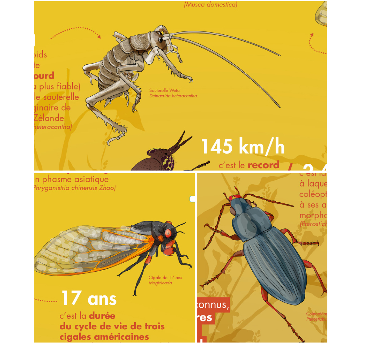 illustrations [en]quête d'insectes
