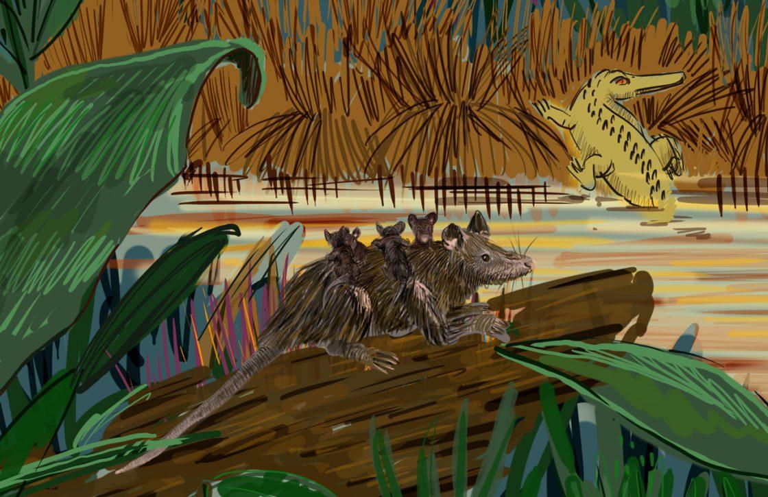 Éocène Sarigues et crocodile