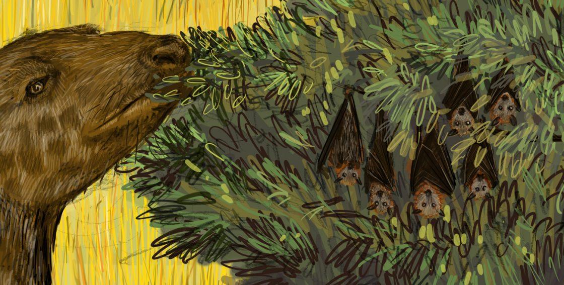 Oligocène : Chauve-souris au repos
