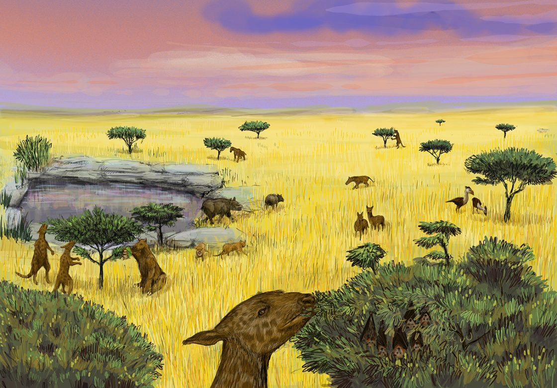 Oligocène -36 à -23 Million d'années : Savane sèche !