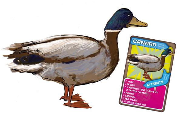 Malle pédagogique les animaux en boite. Le canard.