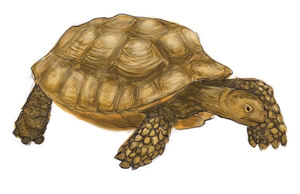 Malle pédagogique les animaux en boite. La tortue.