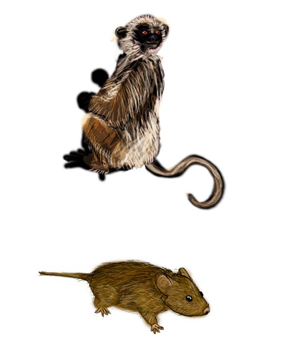 DecouvPhosphat_12-lemurienETsouris