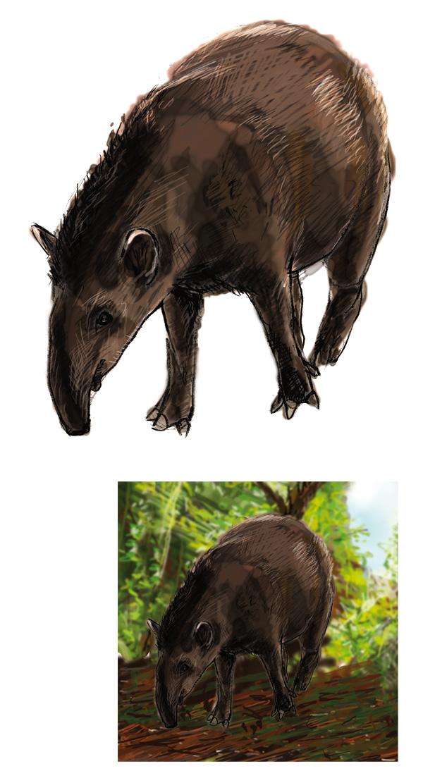 DecouvPhosphat_6-Lophiodon