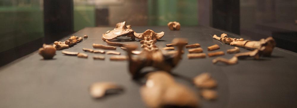 Squelette de Lucy au National Museum of Ethiopia, photo de Zack Abubeker