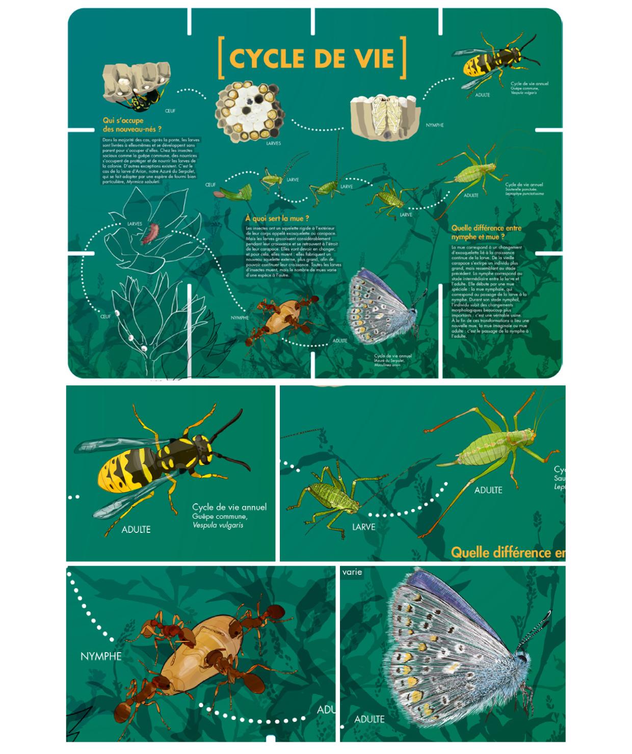 illustrations [en]quête d'insectes